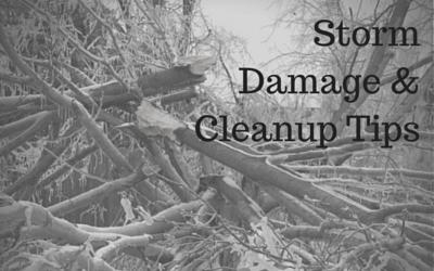 Storm Damage-tree work-winter