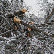 storm damage-winter-tree work