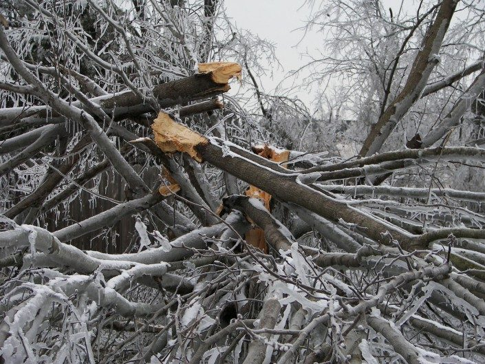 storm damage-winter-tree work