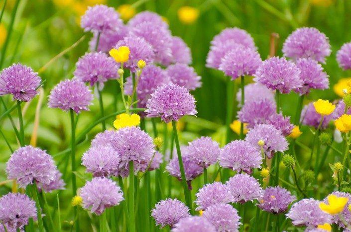 flower-spring chores