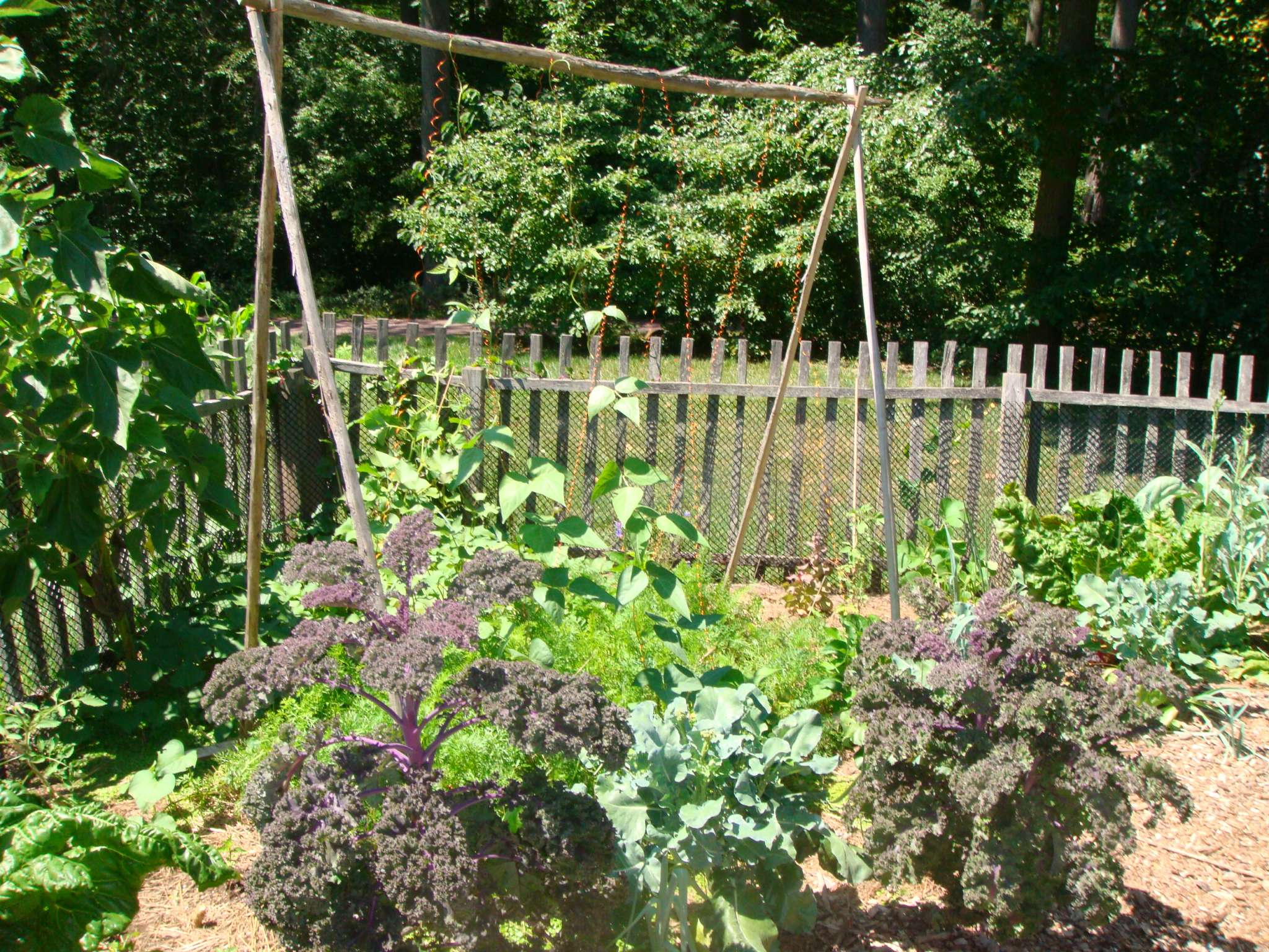 green bean trellis-vegetable gardens