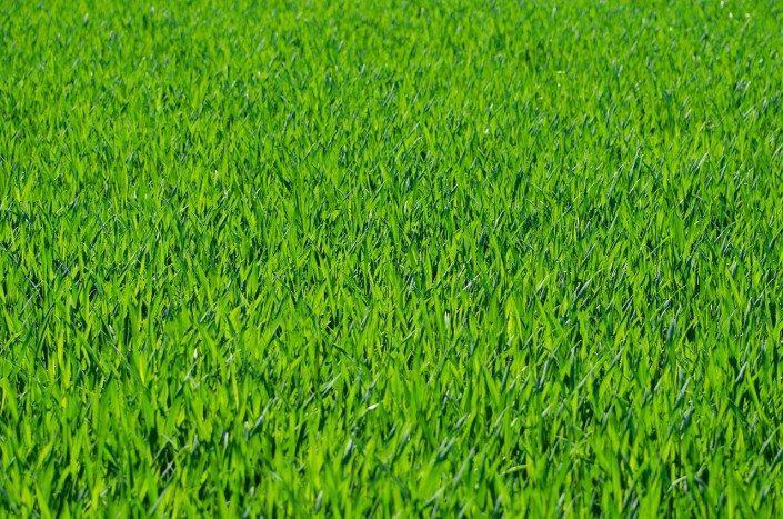 Grass-Garden Tips-lawn care
