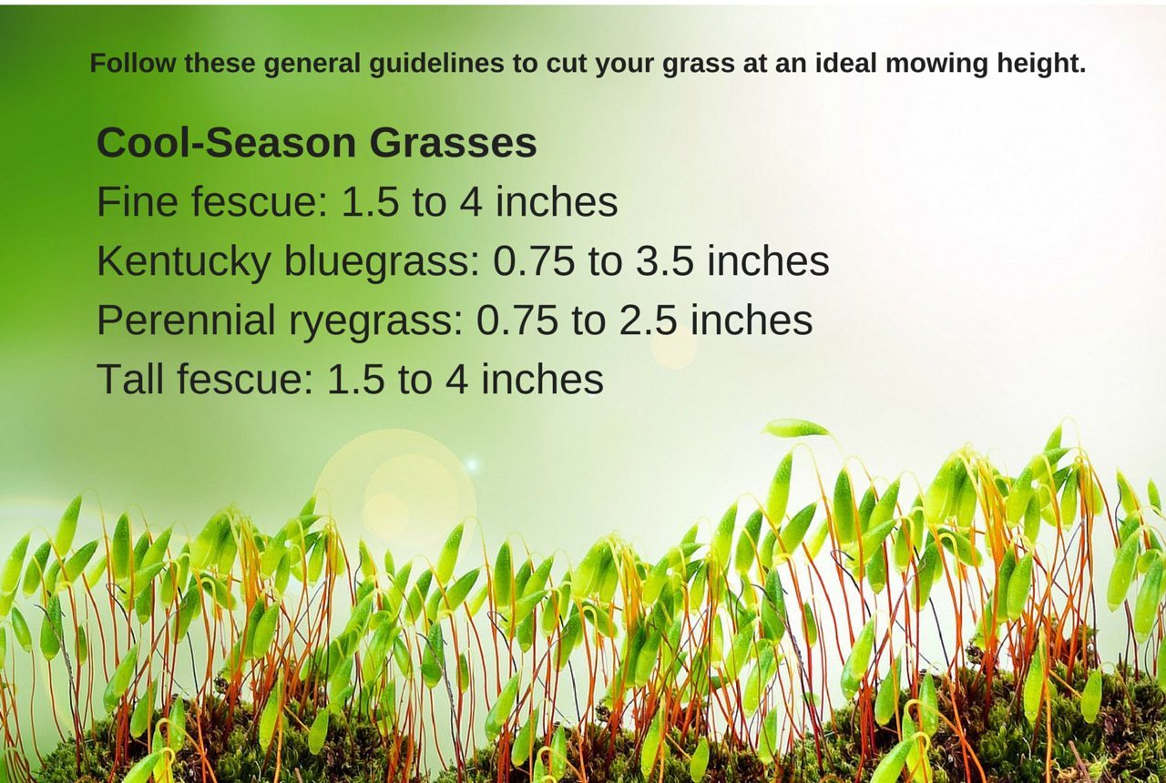 lawn-grass-maintenance-yard