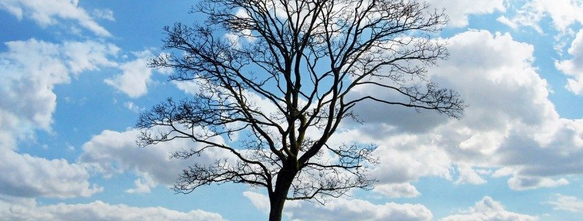 tree-landscape-contractor