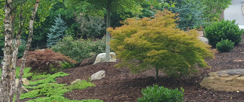 Japanese maples-River birch-landscaper-Weaverville-Lawn-N-Order