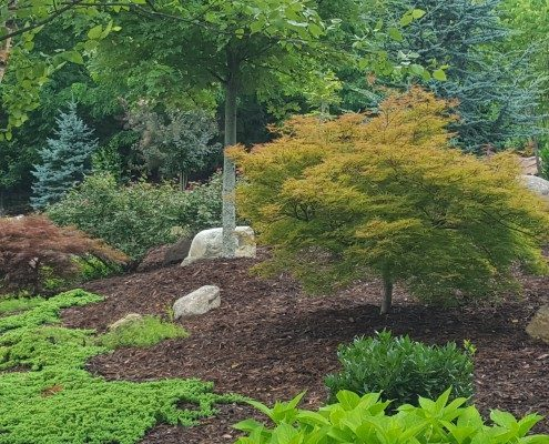Japanese maples-River birch-landscaper-Weaverville-Lawn-N-Order