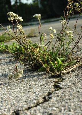 Lawn-N-Order-Driveway-Cracks
