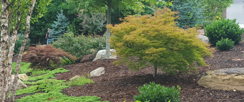 blue spruce-Japanese maple-River birch-mulch-mountain boulders-Asheville landscaper