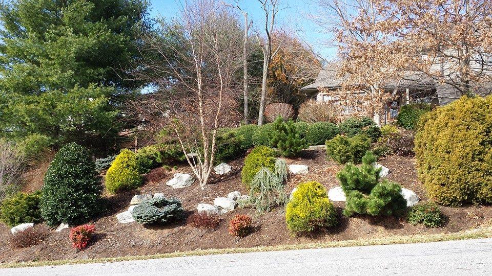 Perfect Steep Slope Erosion Control Conifers Hillside Gardening