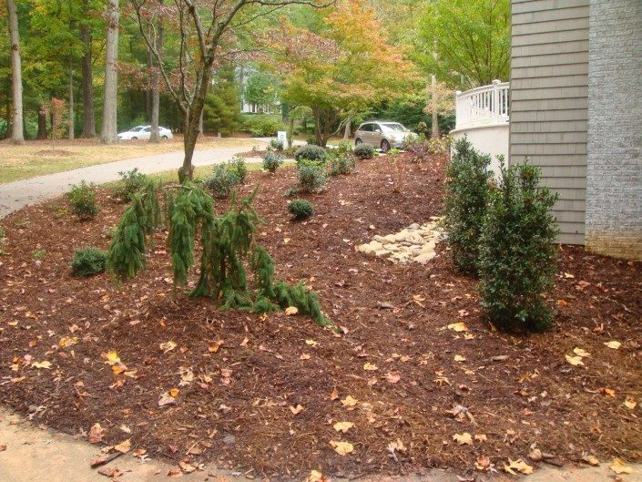 conifers-trees-shrubs-hollies