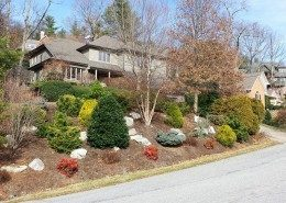 landscaping-conifers-tree service-drainage-hillside gardening