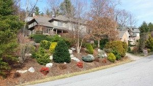 landscaping-conifers-tree service-drainage-hillside gardening