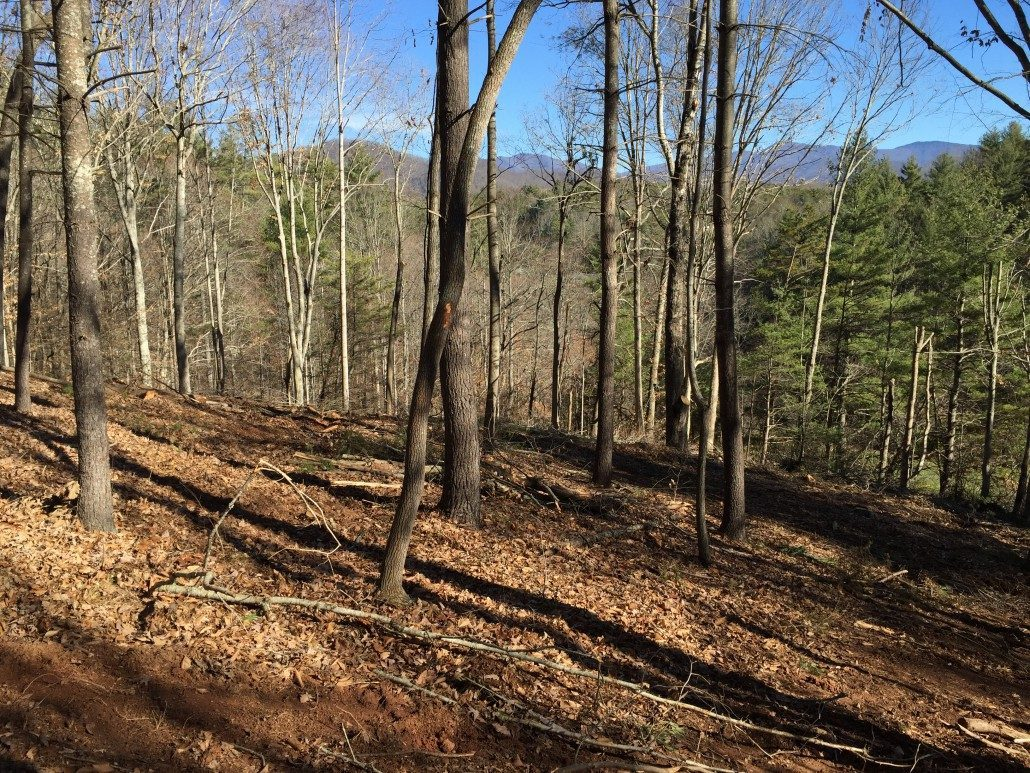 lot land clearing Asheville forestry mulching sustainable real estate 1030x773 land & lot clearing asheville lawn n order Caterpillar 586C Forestry Mulcher at reclaimingppi.co