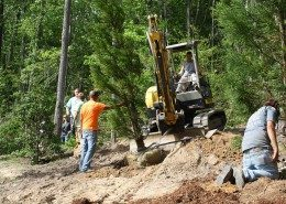 Tree Services 8