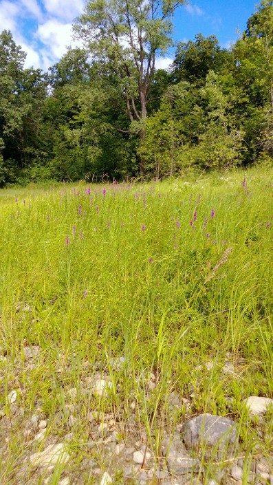 field-lot-land clearing-landscaper