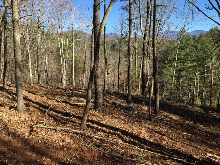 lot-land-clearing-Asheville-forestry mulching-sustainable-real estate