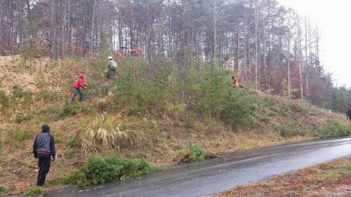 lot-land clearing-Weaverville