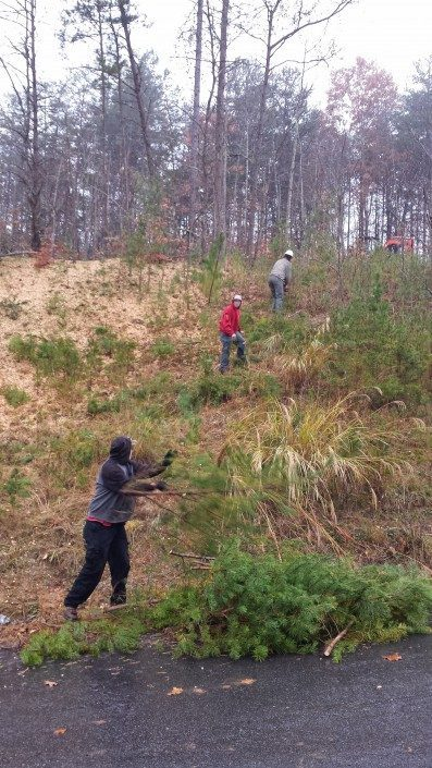 lot-land clearing-Weaverville-Asheville