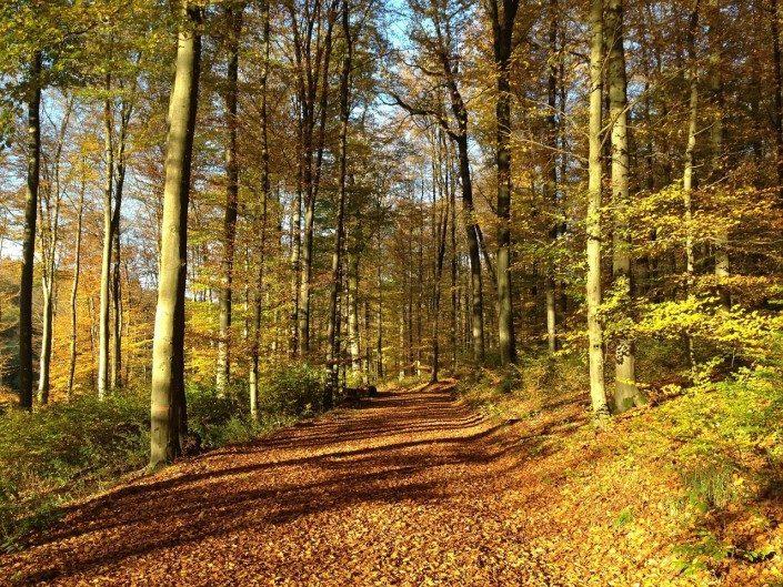 trail-forestry mulching-lot clearing-debris-mulch