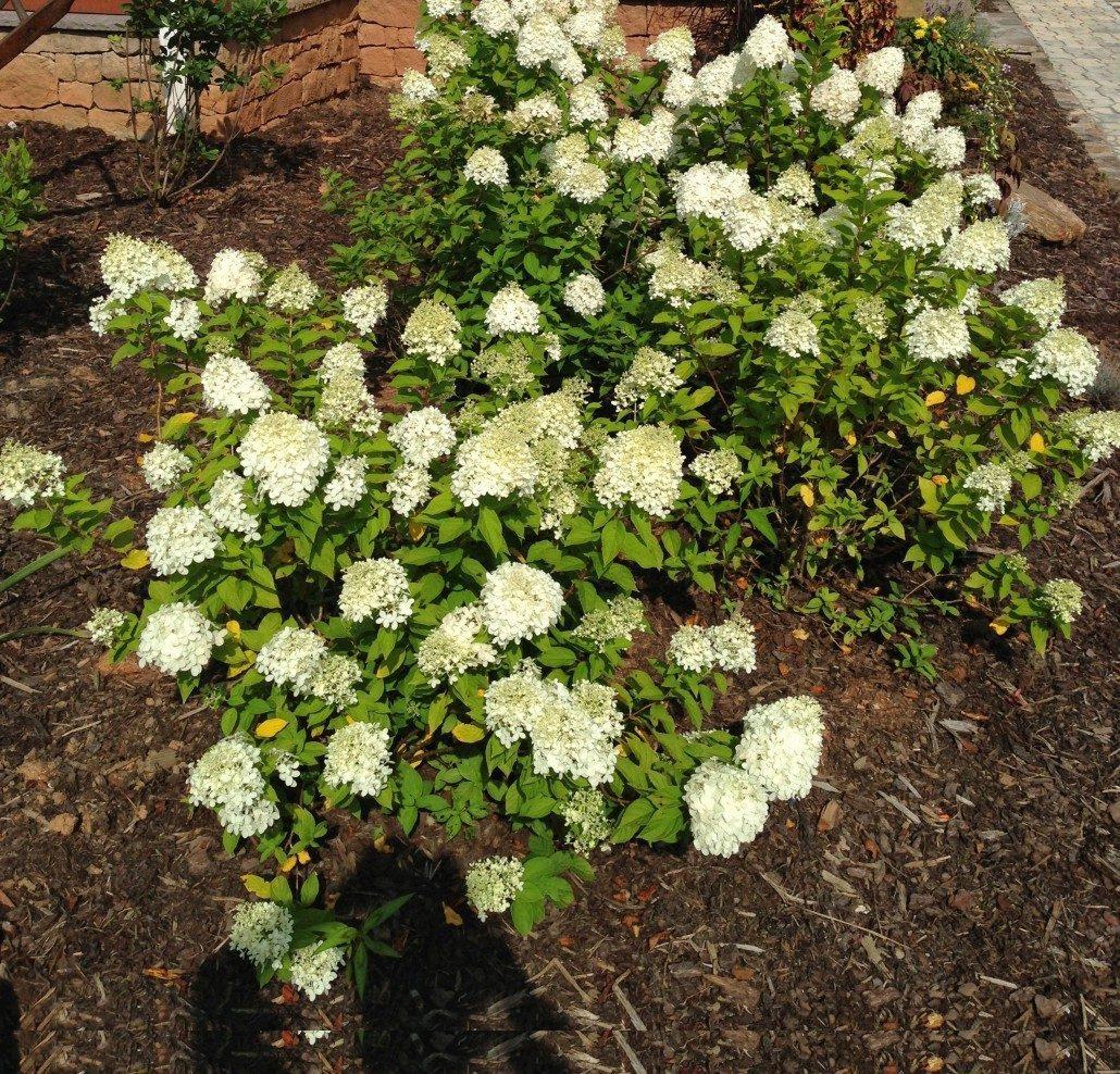 Hillside Gardening Steep Slope Maintenance Amp Runoff