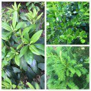landscape care-new plantings