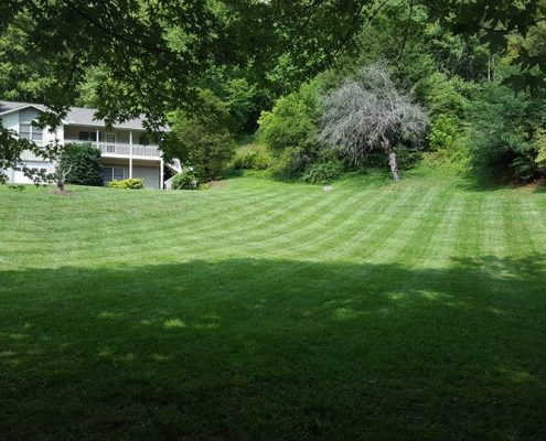 lawn care-landscaping-lawn stripes