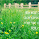 Grass-Seed-Lawn-Lawn-N-Order Landscaping