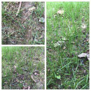grass-grass-seed-lawn