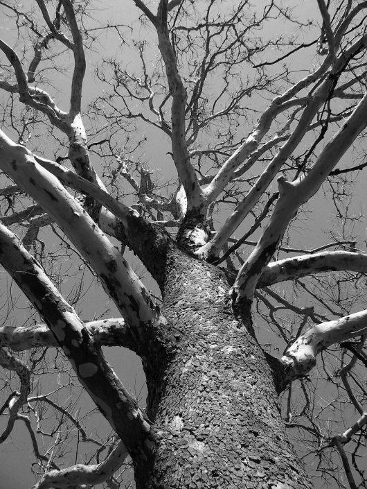 tree trimming-arborist