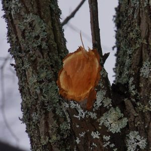 tree services-tree health-